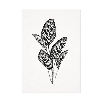 Mélisse - Karte Die Pfauenpflanze