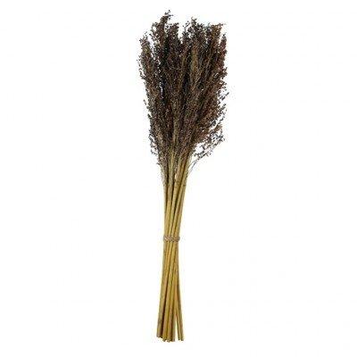 PTMD - Getrocknete Blumen Lavendel