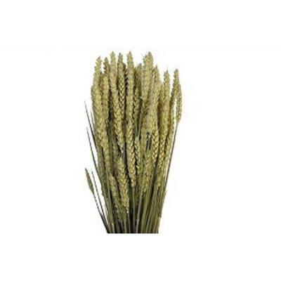 Getrocknete Blumen Weizen